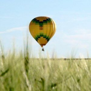 Hierba con el globo aerostatico de fondo